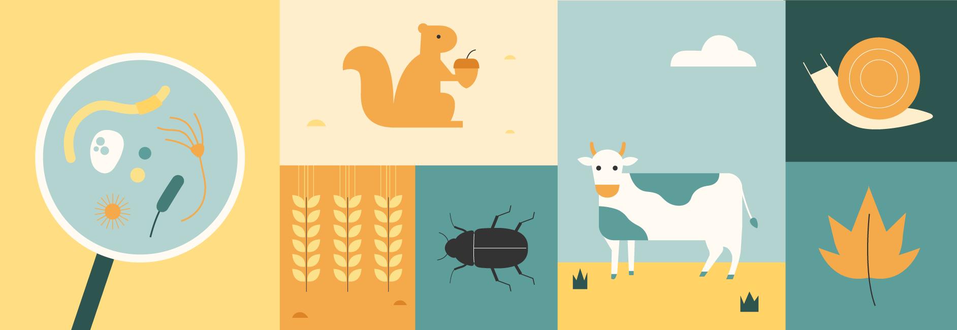 La ilustración con los elementos integrados en el concepto de la agricultura regenerativa