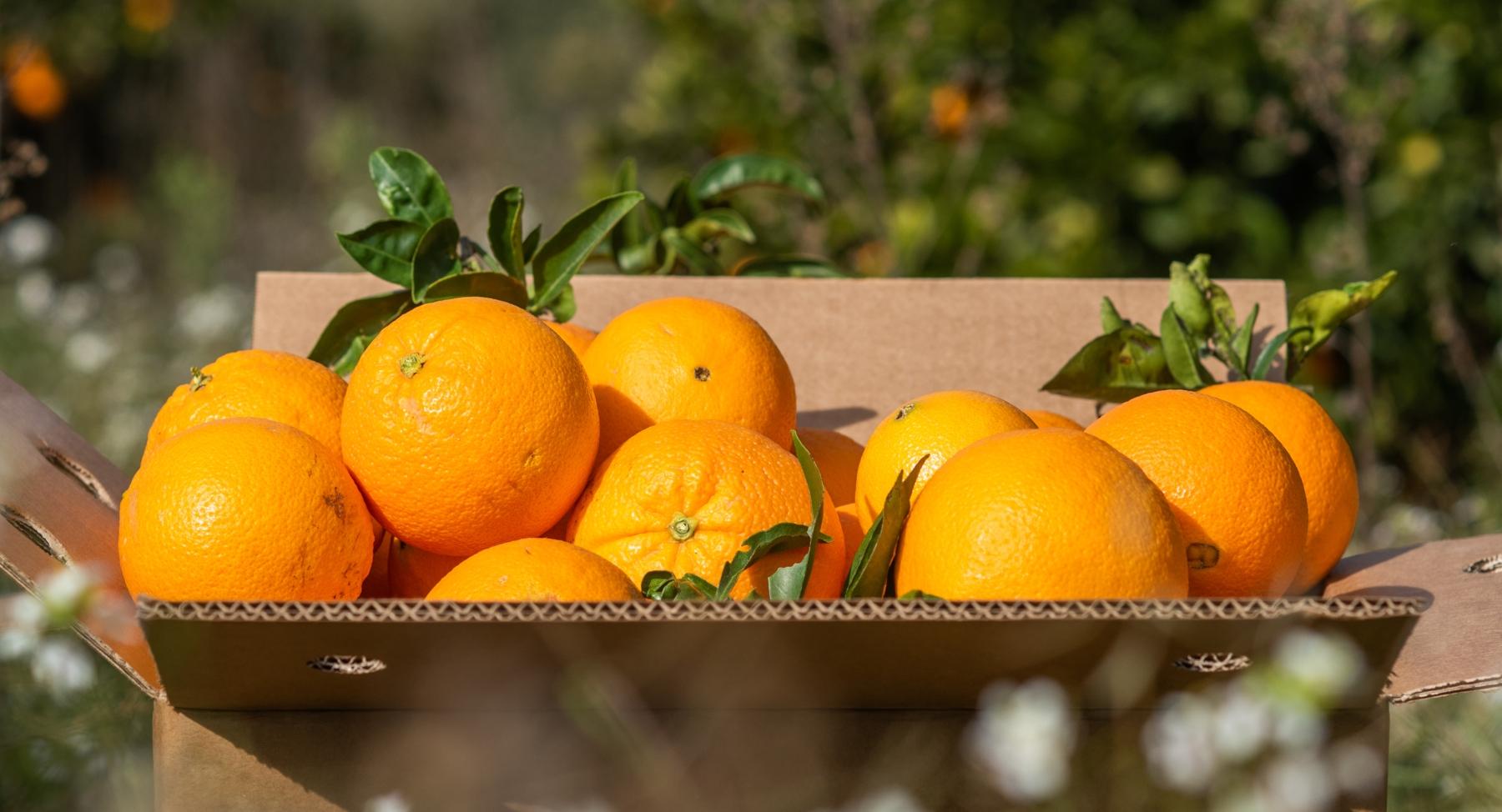 Naranjas orgánicas en una caja de cartón