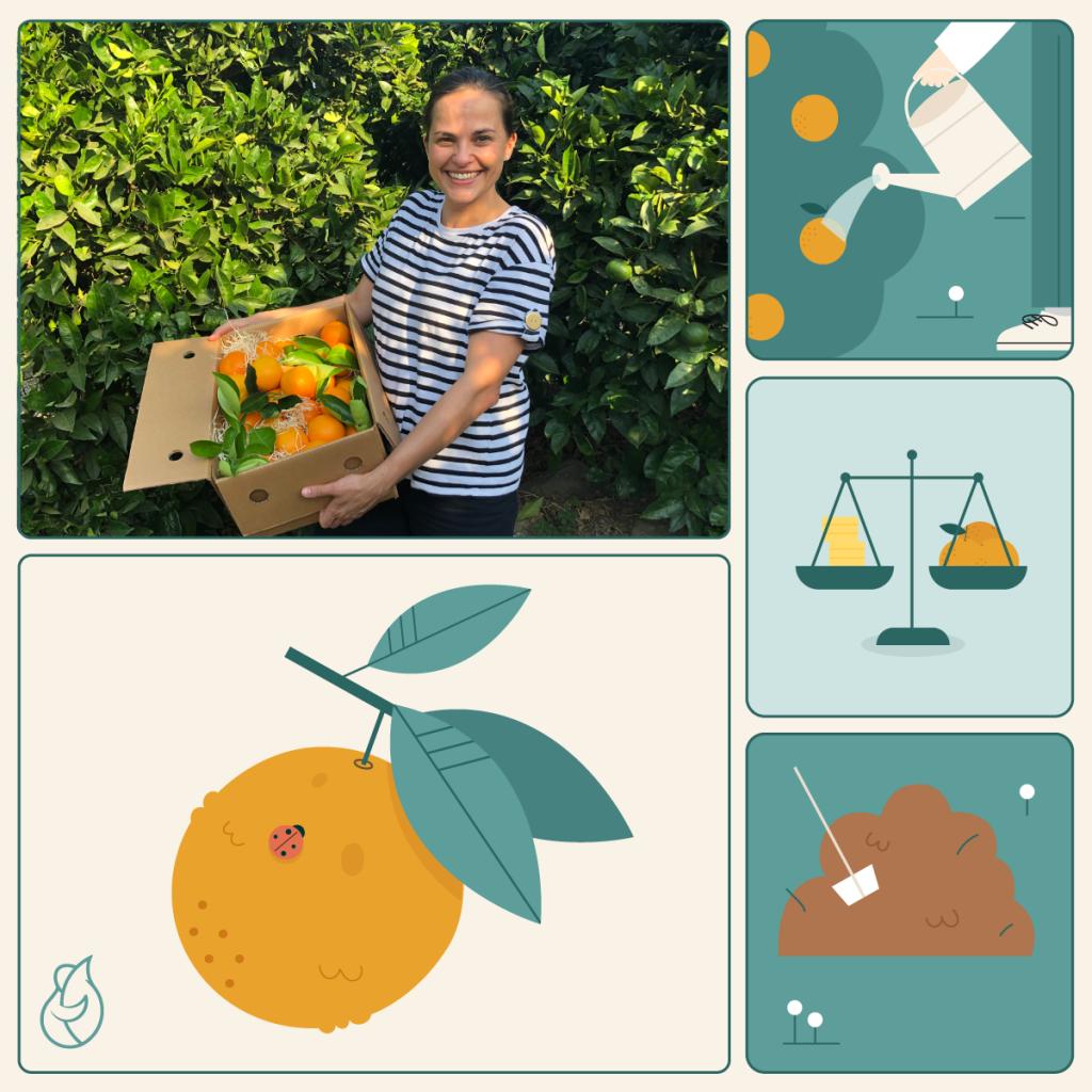 Ilustración del proceso de cultivo de naranjas con María Luisa