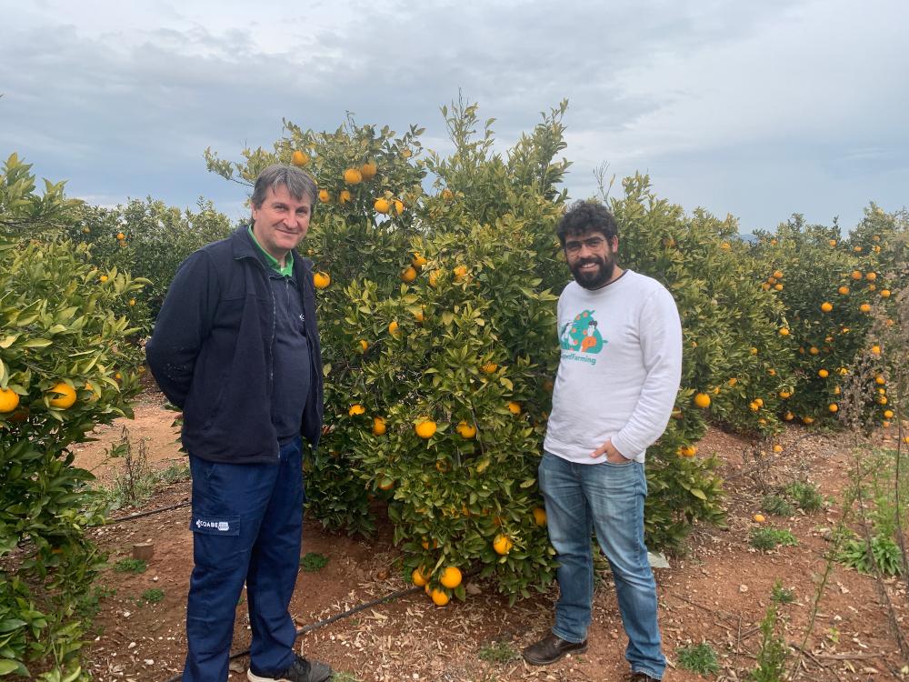 El agricultor Paco Alufre y Juan Plasencia en un campo de naranjos