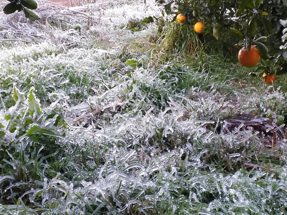 Hierba helada por el frío