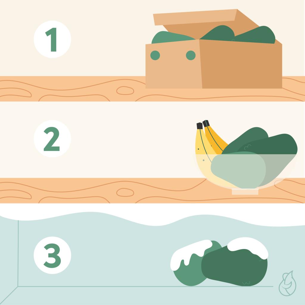 Ilustración de las etapas de conservación de la fruta