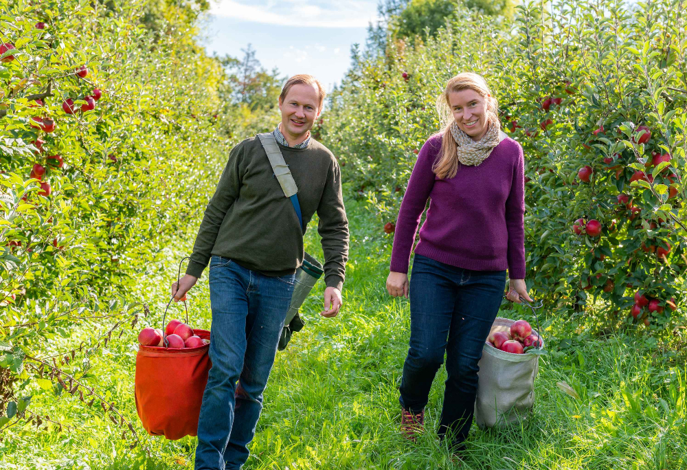Two farmers walking between apple trees with a bucket of apples in hand