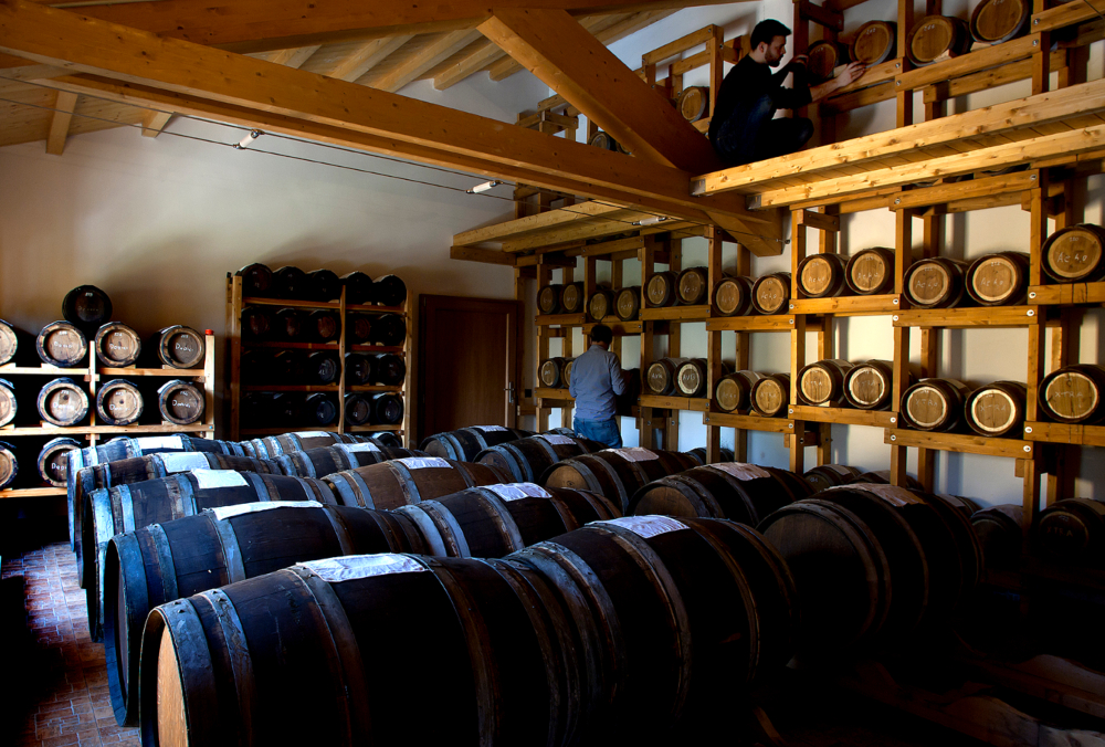 A cellar with wooden barrels