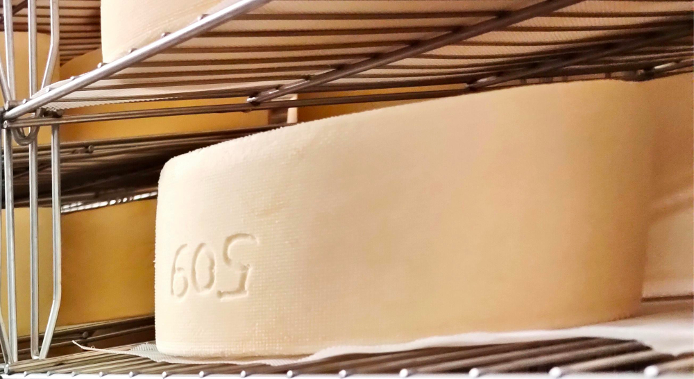 Sheep cheese on a shelf