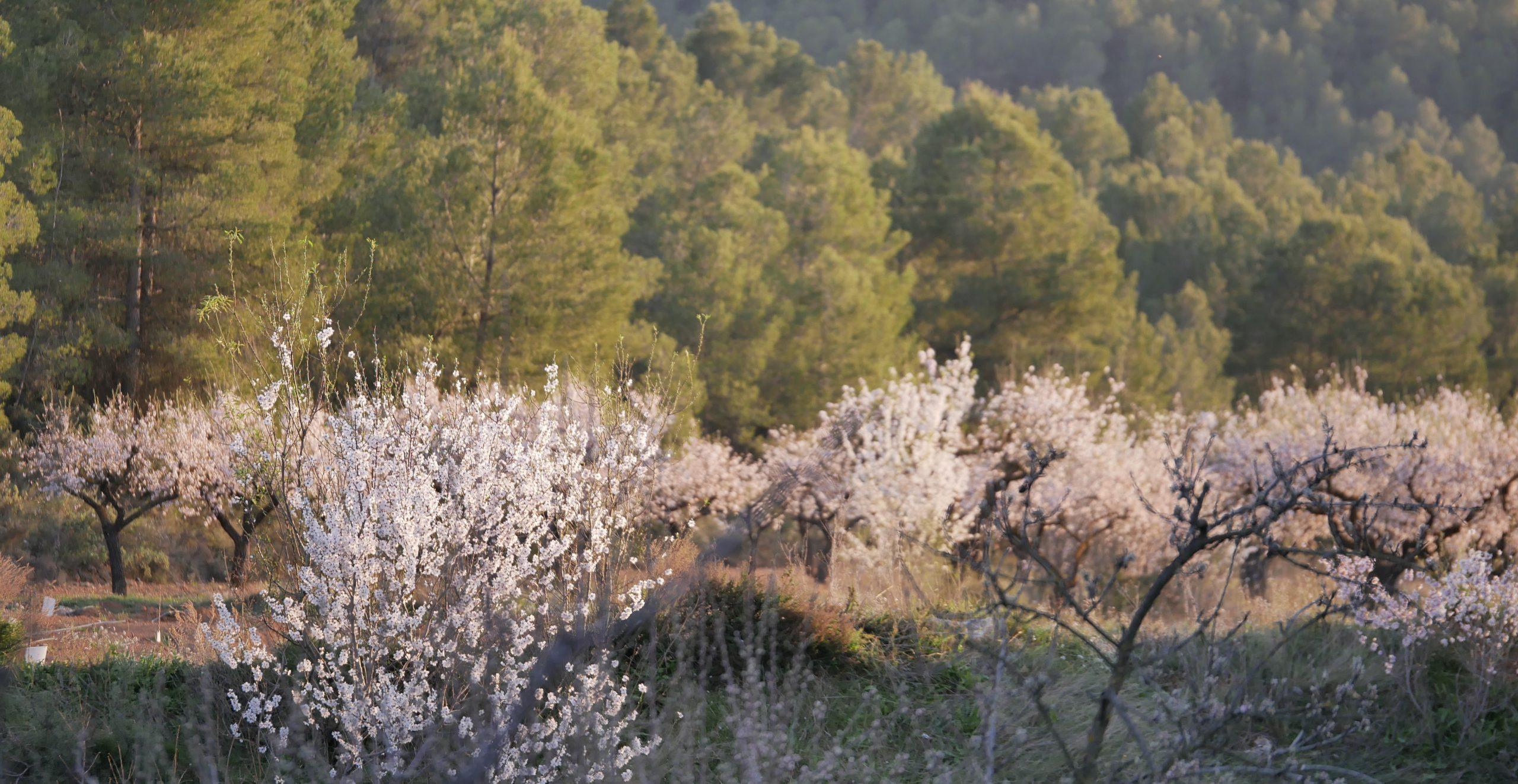 Paysage avec des arbres aux feuilles blanches et vertes